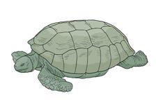 Sköldpaddatecknad film Royaltyfria Foton