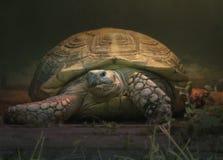 Sköldpaddatortillan i hans hemtrevliga lilla hus håller den guld- tangenten i förväntan av Pinocchio royaltyfri foto