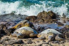 sköldpaddor för grönt hav arkivbild