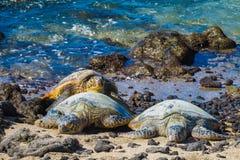 sköldpaddor för grönt hav royaltyfria foton