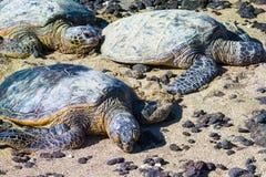 Sköldpaddor på den hawaianska stranden royaltyfri foto