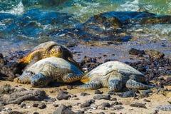 Sköldpaddor på den vulkaniska stranden arkivfoto