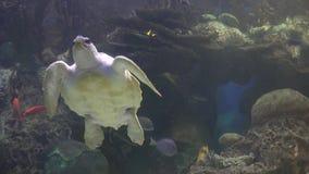 Sköldpaddor sköldpaddor, reptilar, djur, djurliv stock video