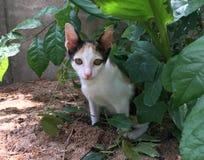 Sköldpadds- kattungekatt som sitter i buske och söker efter offret royaltyfri fotografi