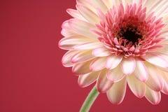 skönhet Fotografering för Bildbyråer