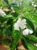 Skönhet av blomman i trädgården arkivfoto