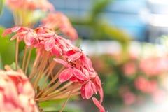 Skönhet av blommor Arkivfoton