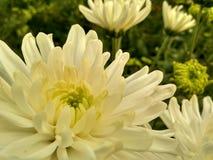 Skönhet av blommor Fotografering för Bildbyråer