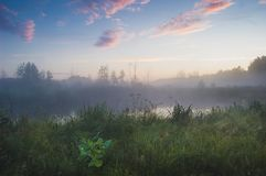 Skönhet av den dimmiga morgonen Royaltyfria Bilder