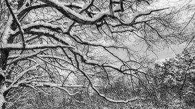 Skönhet av det svartvita fotoet Arkivfoton