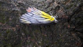 Skönhet av en fjäril Royaltyfri Bild