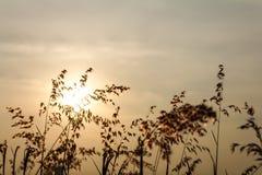 Skönhet av födelse- gräs Fotografering för Bildbyråer