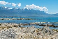 Skönhet av för Kaikoura för havskust ön Nya Zeeland för ostkust strand den södra Arkivbild