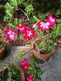 Skönhet av naturen Royaltyfria Foton