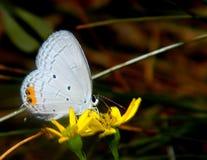Skönhet av naturen Arkivbild
