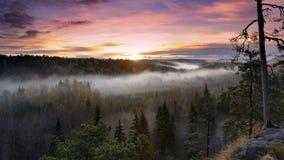 Skönhet av naturen Royaltyfri Bild