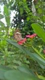 Skönhet av naturen Royaltyfria Bilder