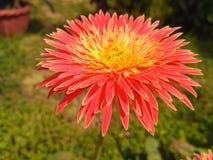 Skönhet av naturen Fotografering för Bildbyråer