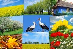 Skönhet av Polen-collage Royaltyfri Bild
