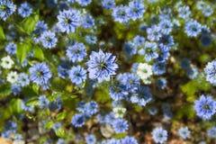 Skönhet av våren Arkivbilder