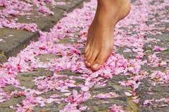 Skönhet av våren Royaltyfri Fotografi