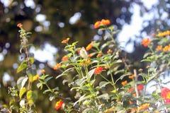 Skönhet av våren Royaltyfri Bild