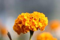 Skönhet av våren Fotografering för Bildbyråer