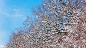 Skönhet av vinterskogen Arkivfoton