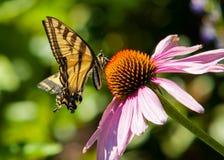 skönhet blommar fractalbildsommar Royaltyfria Bilder
