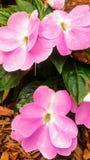 skönhet blommar fractalbildsommar Royaltyfri Fotografi