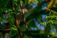 Skönhet för natur` s Fotografering för Bildbyråer