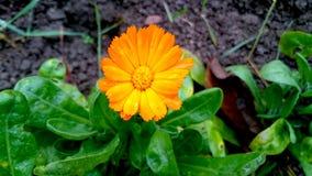 Skönhet i apelsin Royaltyfri Fotografi