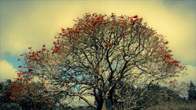Skönhet i himmelträd Royaltyfri Fotografi