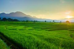 skönhet i morgonen med blommor i panorama indonesia royaltyfri foto