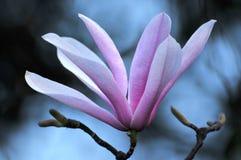 Skönhet i natur Royaltyfri Bild