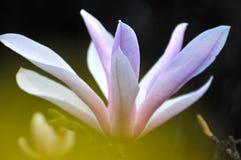 Skönhet i natur Royaltyfri Foto