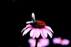 Skönhet i natur Fotografering för Bildbyråer