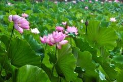 Skönhet i natur Royaltyfria Bilder