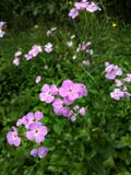 Skönhet i ogräs Royaltyfria Bilder