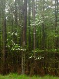 Skönhet i skogen Royaltyfri Fotografi