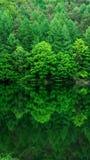 Skönhet inom naturen royaltyfri bild