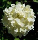 Skönhetblomma royaltyfri fotografi