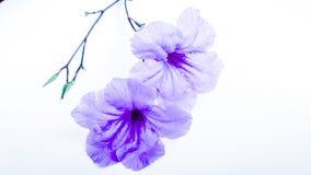 Skönhetblommakonster Arkivbild