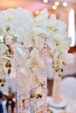 Skönhetbruden i brud- kappa med snör åt skyler kastar bröllopbuketten inomhus Royaltyfri Fotografi