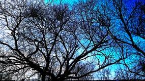 Skönheten av att fläta samman trädfilialer royaltyfria foton