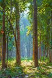Skönheten av djungeln på den Buxa nationalskogen arkivbild