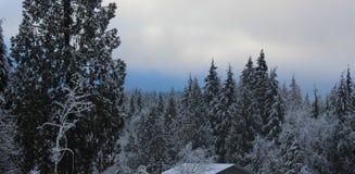 Skönheten av en klassisk kanadensisk vinter Arkivfoto