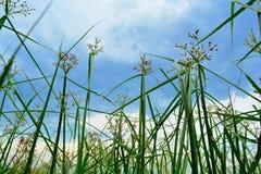 Skönheten av gräset Arkivfoton