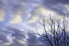 Skönheten av himlen med moln och trädet royaltyfri foto
