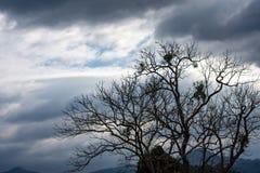 Skönheten av himlen med moln och trädet royaltyfri bild
